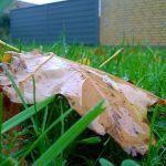 Lumia 830 testfoto