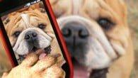 Kæledyr er vilde med gadgets, men de ødelægger vores smartphones og bærbare computere for millioner.