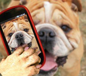 hund med smartphone