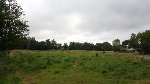 En lille mark med heste (Foto: MereMobil.dk)