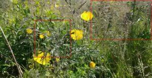 Testklip med højt græs. Her ses tydelig fejl omkring græsset i midten og øverst i højre hjørne