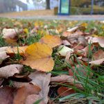 Efterårsfoto fra Nexus 6P (Foto: MereMobil.dk)