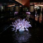 Foto fra Huawei P9 (Foto: MereMobil.dk