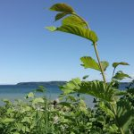 Testfoto fra Sony Xperia XA (Foto: MereMobil.dk)
