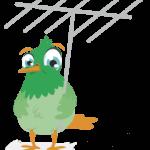 Fuglen fra Tjeep (Foto: Tjeep)