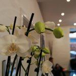 Foto fra Huawei P10