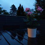 Aftenfoto fra HTC U11. Taget uden fotolys (Foto: MereMobil.dk)