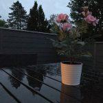 Aftenfoto fra iPhone 7 Plus. Taget uden fotolys (Foto: MereMobil.dk)