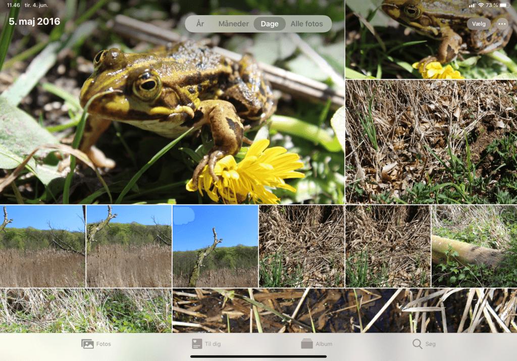 Den nye Foto-app iPadOS