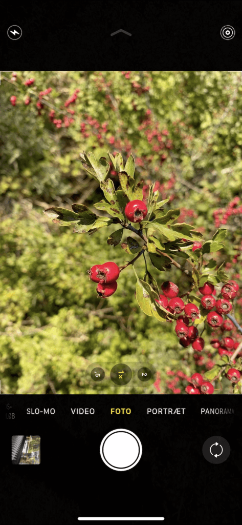 Almindelig kamera-tilstand på iPhone 11 Pro (Foto: MereMobil)